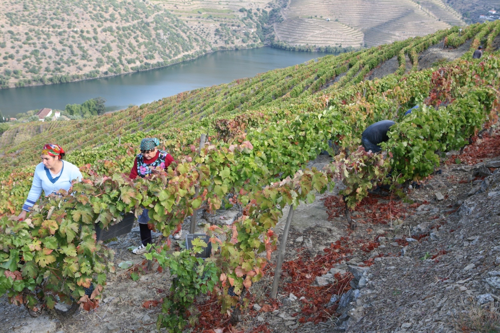 How Portugal Became the Epicenter of Sustainability for the Wine Industry