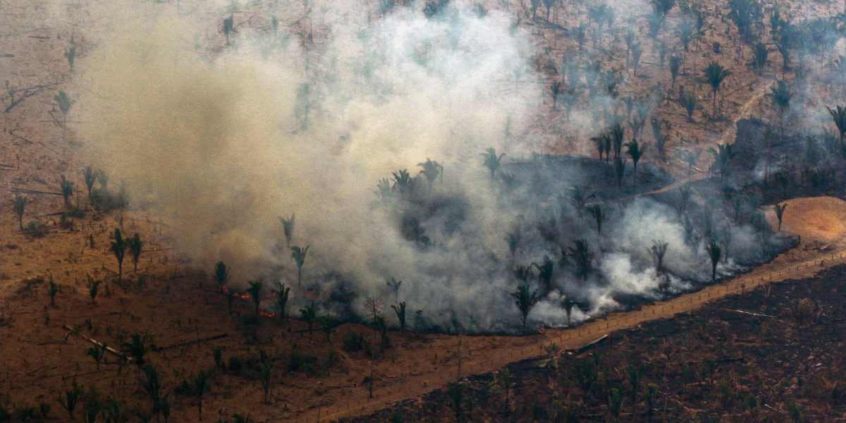 What's Happening in the Amazon? Brazil's Rainforest Has Been On Fire for Three Weeks