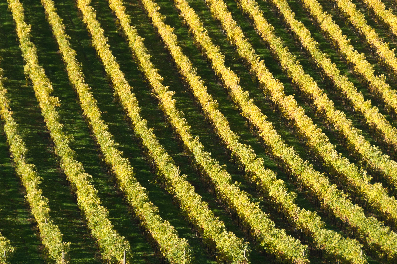 Saint-Preuil in the Cognac region in southwestern France.