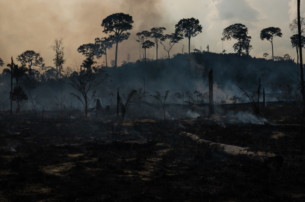 investors call on companies to address deforestation
