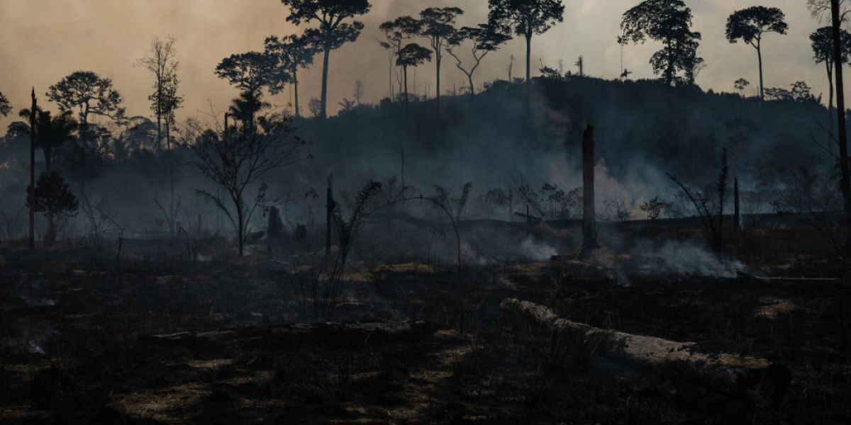 As Amazon Burns, Major Investors Warn That Companies Run 'Systemic' Risks If They Don't Fight Deforestation