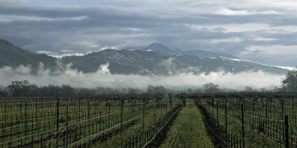 Napa Mountain Wines Have Just as Much to Offer as Napa Valley Bottles