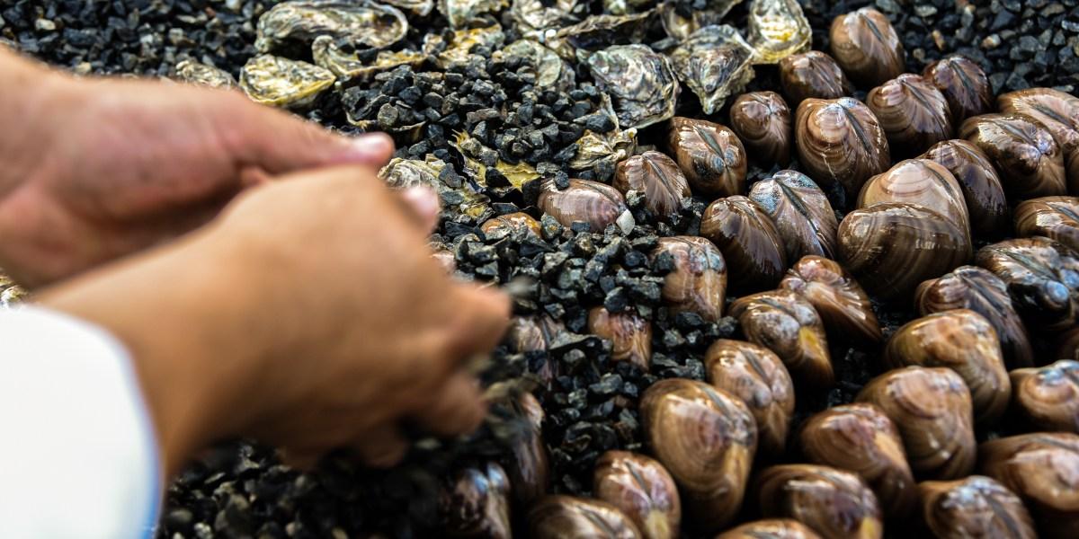 Charred Chocolate Clams: The Secrets of Baja's Signature Dish