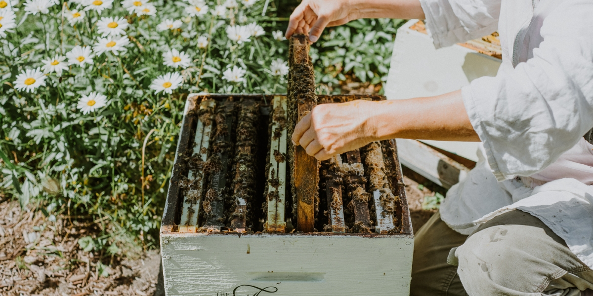 Get Buzzed at Your Next Hotel Stay Thanks to These Rooftop Beehives