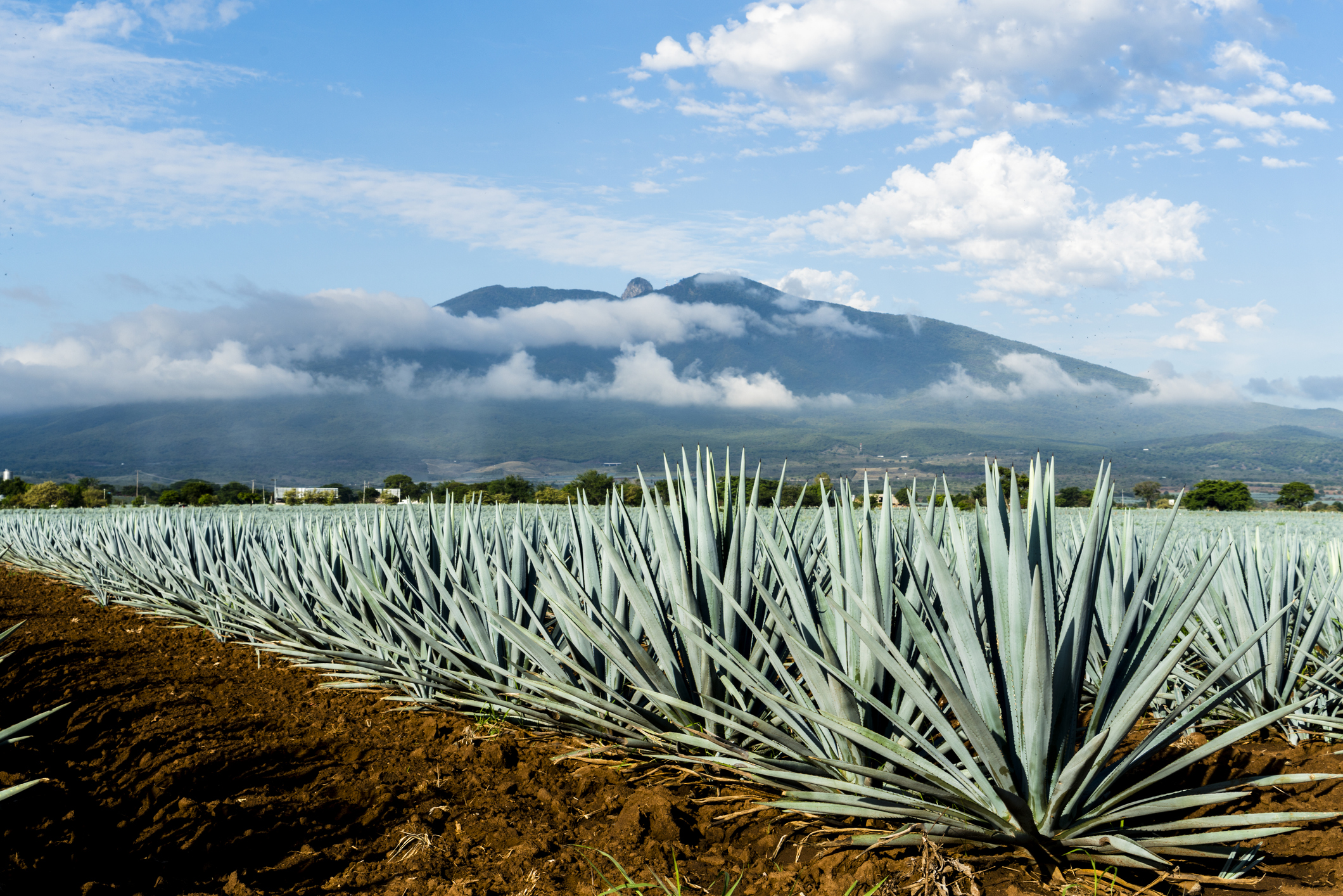 Mexico S Tequila Shortage Might Be Over Soon Fortune