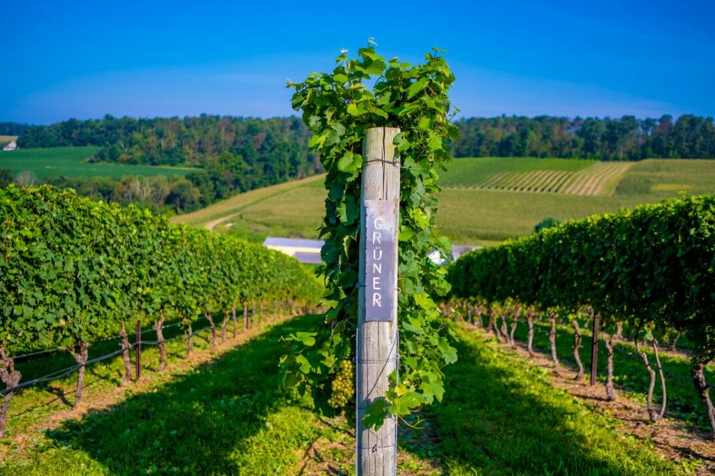 How a Winemaker's Plant-Based Diet Led Her to Grow Austrian Grapes in Pennsylvania