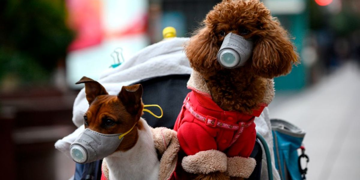 A dog in Hong Kong has tested 'weak positive' for coronavirus