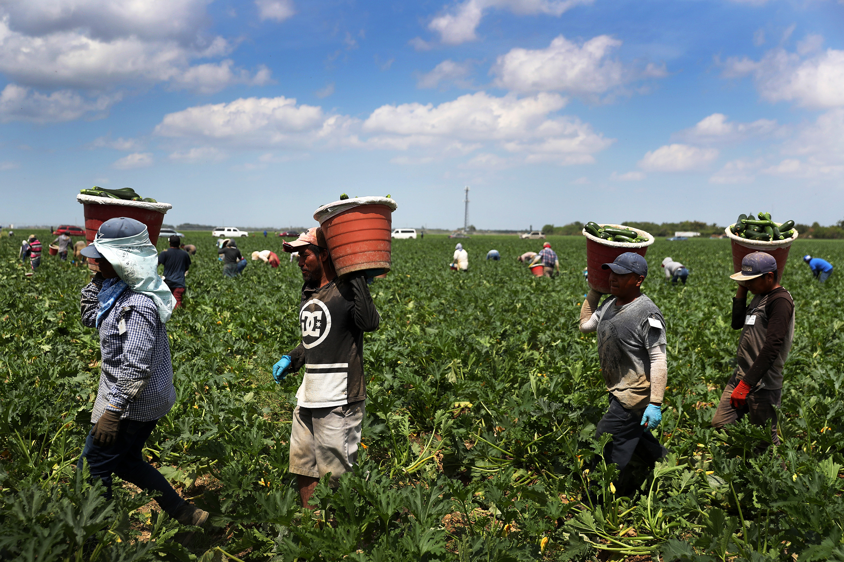 Coronavirus essential workers: Farmworkers are left unprotected during  pandemic | Fortune