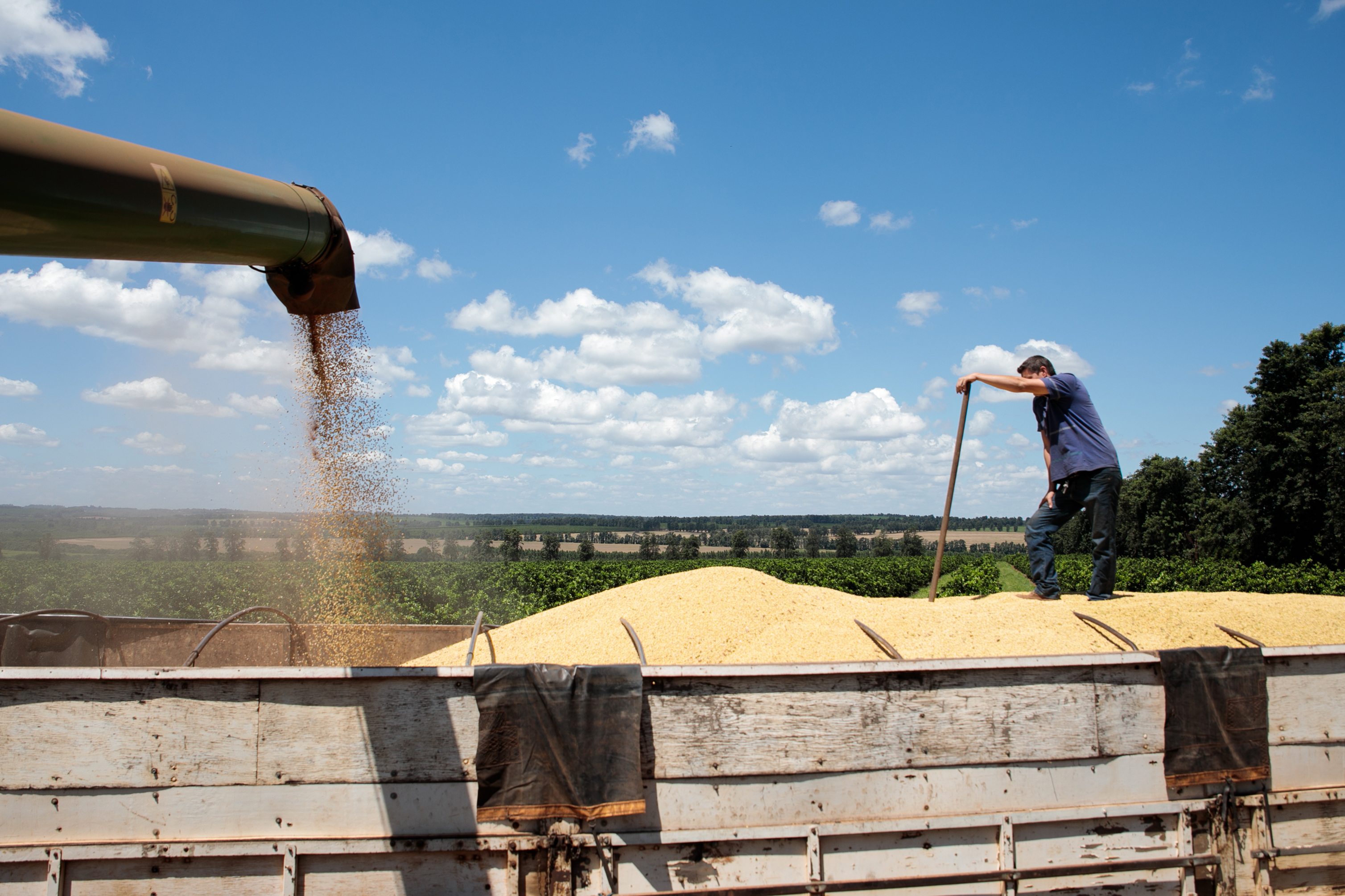 Farmers are selling soybeans two years in advance in rare trade thumbnail