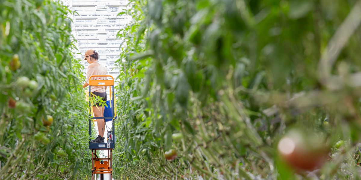 The future of the food supply chain lives on a rooftop in Montreal