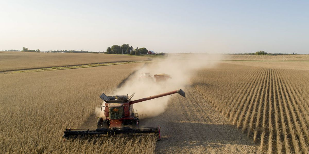 American farmers are having a bumper year-- thanks to skyrocketing need from China thumbnail