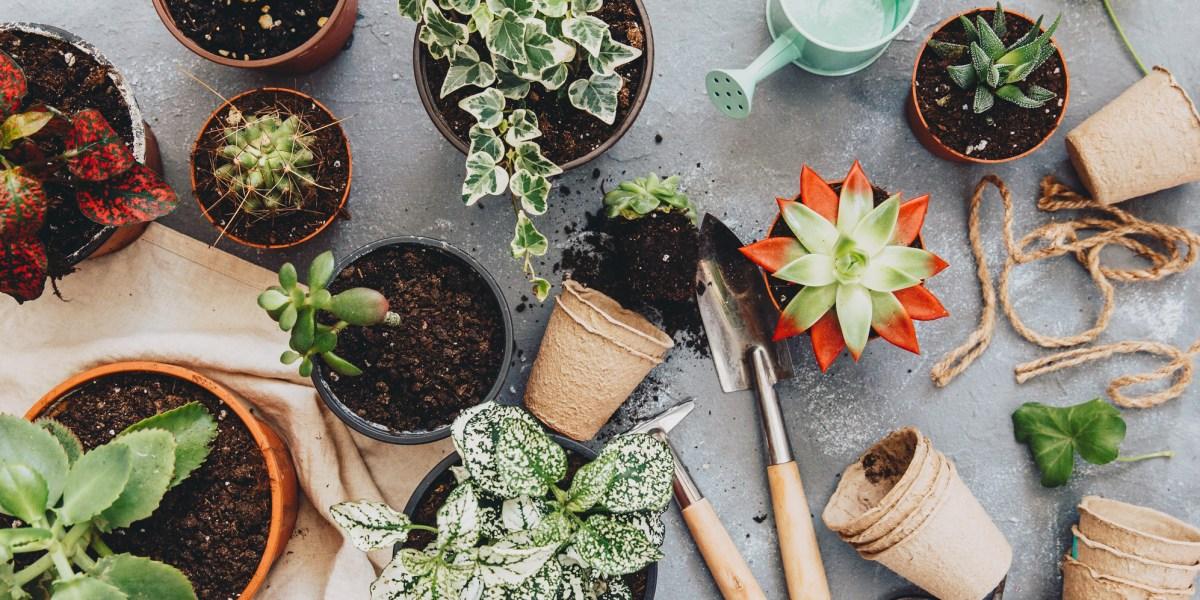 Gifts for the novice gardener